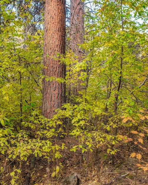 En mooie bladeren aan bomen in het bos Gratis Foto
