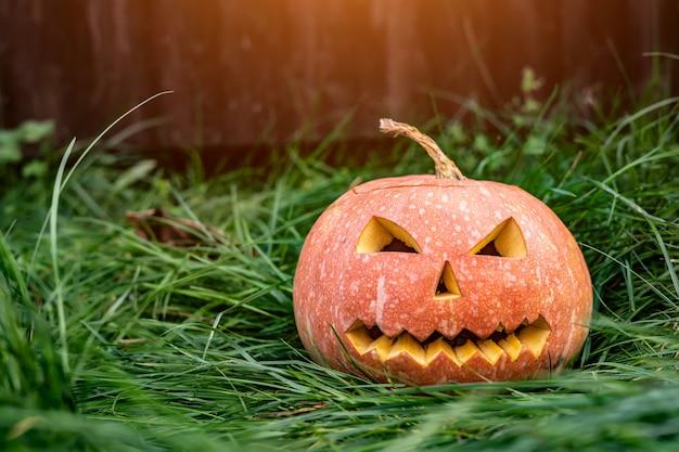 Enge pompoen voor halloween op het gras. Premium Foto
