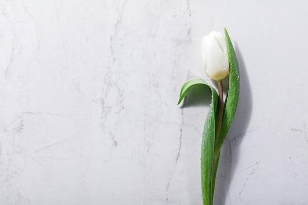 Enige witte de lentebloem op een marmeren achtergrond. Premium Foto
