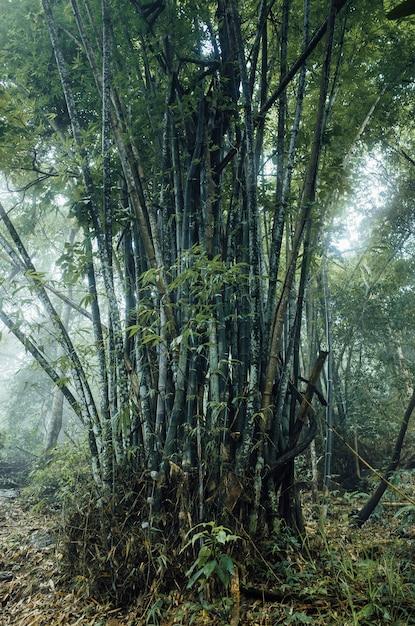 Enorme bamboebos in thailand Gratis Foto