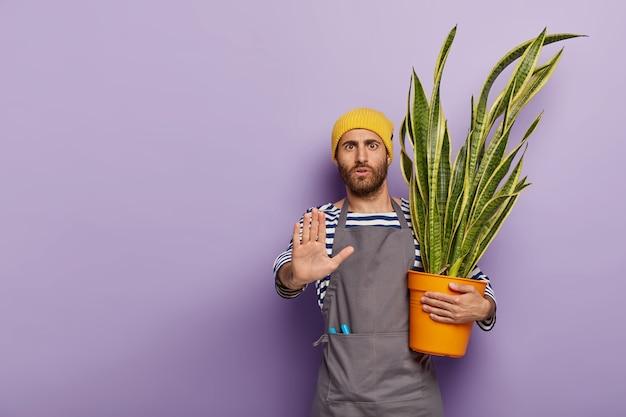 Ernstige geschokte mannelijke plantenliefhebber maakt weigeringsgebaar, zegt dat hij geen hulp nodig heeft, geeft om sansevieria die in bloempot groeit Gratis Foto