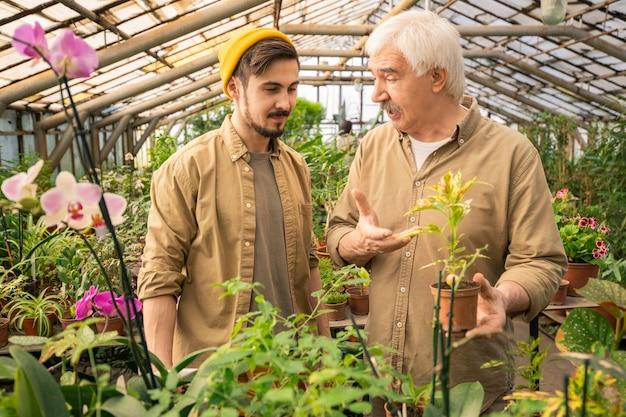 Ervaren senior man die potplant houdt en ernaar wijst terwijl hij zoon leert om planten in kas te kweken Premium Foto