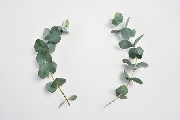 Eucalyptus verlaat frame op witte achtergrond met plaats voor uw tekst Premium Foto