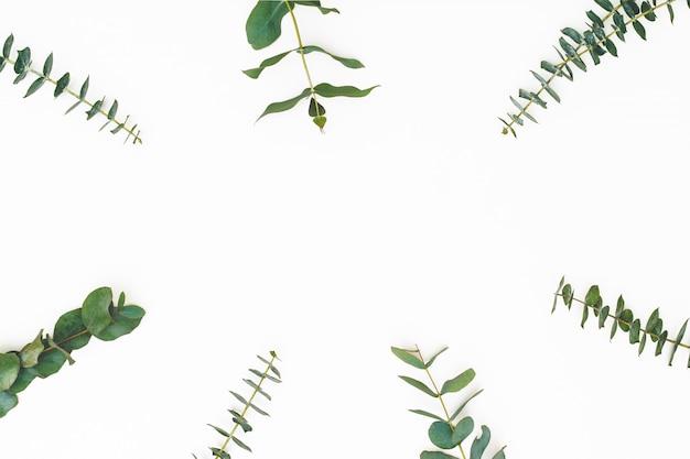 Eucalyptusbladeren op witte achtergrond. patroon gemaakt van eualyptus takken. plat lag, bovenaanzicht, kopie ruimte Premium Foto