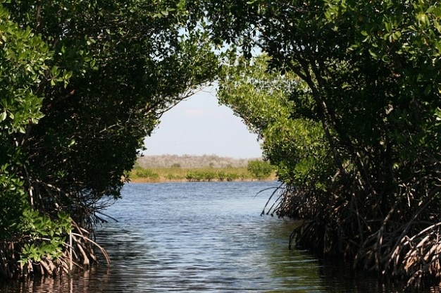 Everglades mangroven moerassen Gratis Foto