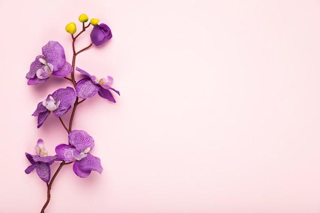 Exemplaar-ruimte bloeiende bloemtak Gratis Foto