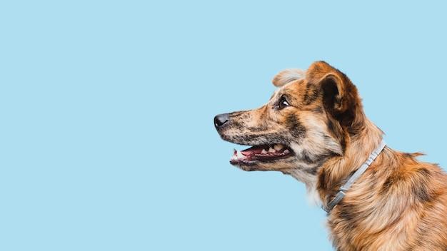 Exemplaar-ruimte van de zijaanzicht de binnenlandse hond Gratis Foto