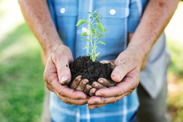 Familie die een nieuwe boom plant voor de toekomst Premium Foto