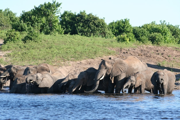 Familyfield met olifanten Premium Foto