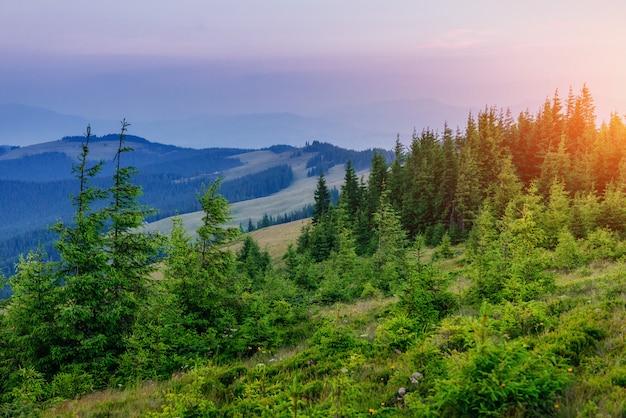 Fantastische mistige dag en heldere heuvels door zonlicht Premium Foto