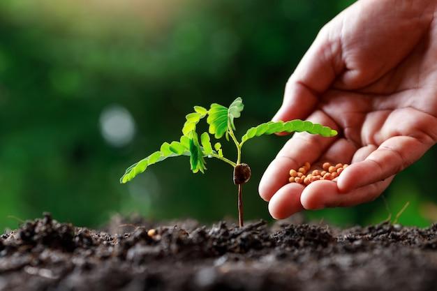 Farmer hand die jonge babyplanten voedt Premium Foto