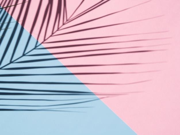 Ficus bladschaduw op een hemelsblauwe en roze achtergrond Gratis Foto