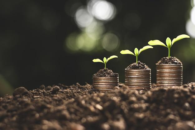 Financiële groei, munten en zaailing. Premium Foto