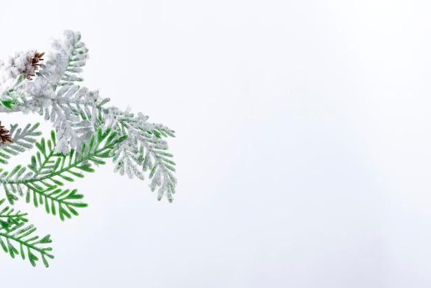 Fir vertakking van de beslissingsstructuur met kegels bedekt met sneeuw op witte achtergrond Premium Foto