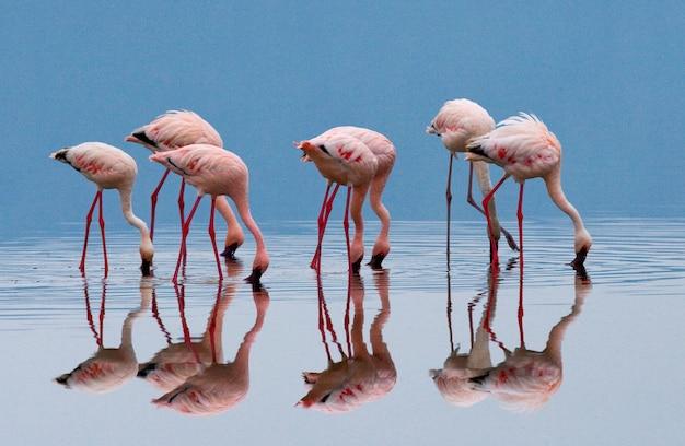 Flamingo's op het meer met reflectie Premium Foto