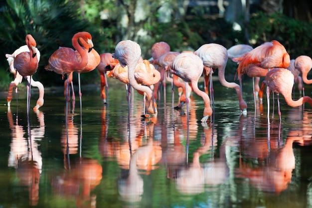 Flamingo's staan in water Gratis Foto