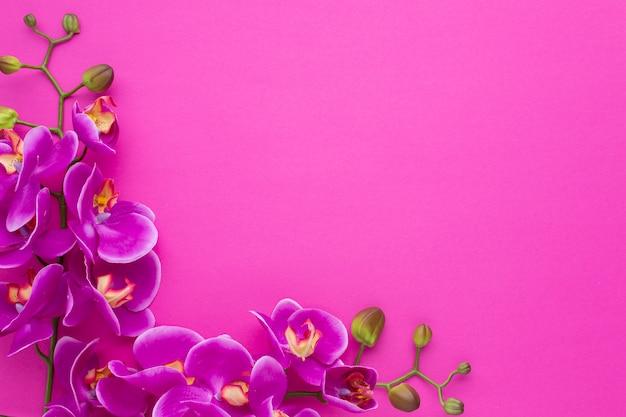 Frame met exemplaar ruimte roze achtergrond Gratis Foto
