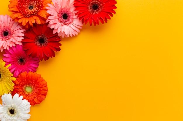Frame met gerberabloemen en exemplaarruimte Gratis Foto