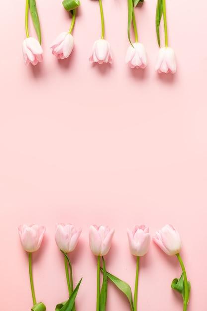Frame van roze tulpen op een roze achtergrond. Premium Foto