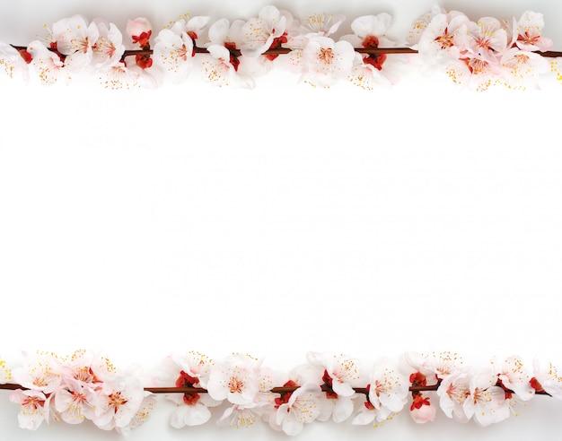 Frame van sakura op witte achtergrond Premium Foto