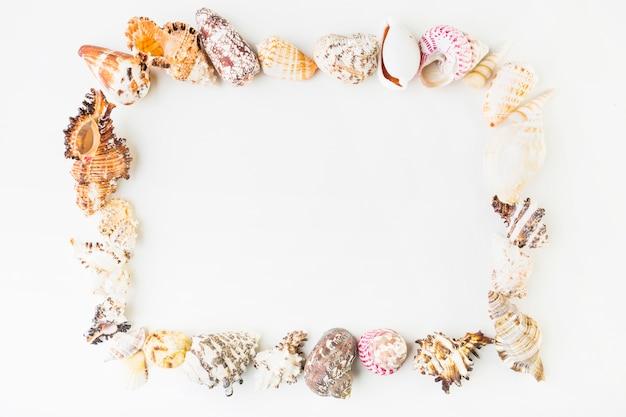 Frame van zeeschelpen Gratis Foto