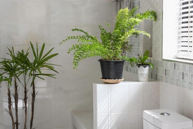 Frisse groene varenplantdecoratie in modern toilet of badkamer Premium Foto