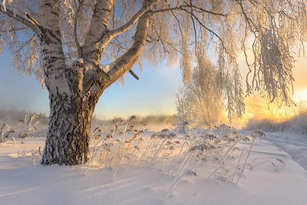 Frosty dawn Premium Foto
