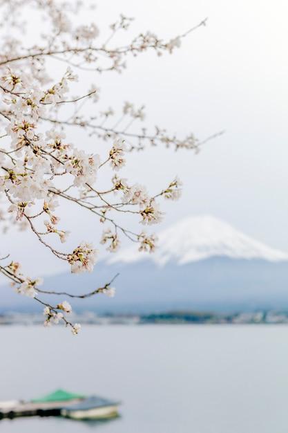 Fuji-berg en sakura bij meer kawaguchiko Gratis Foto