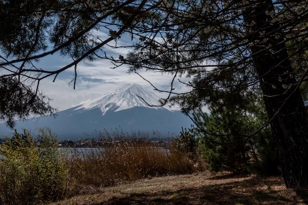 Fuji-berg met boom vooraan. fuji zet sneeuw op bovenkant op fujisan wit op Premium Foto