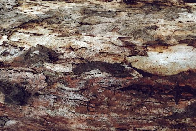Gedetailleerde textuur van boomhout Gratis Foto