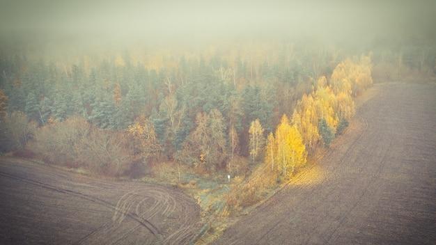 Geel berkengebladerte aan de rand van het dennenbos in de herfst mistige ochtend. Premium Foto