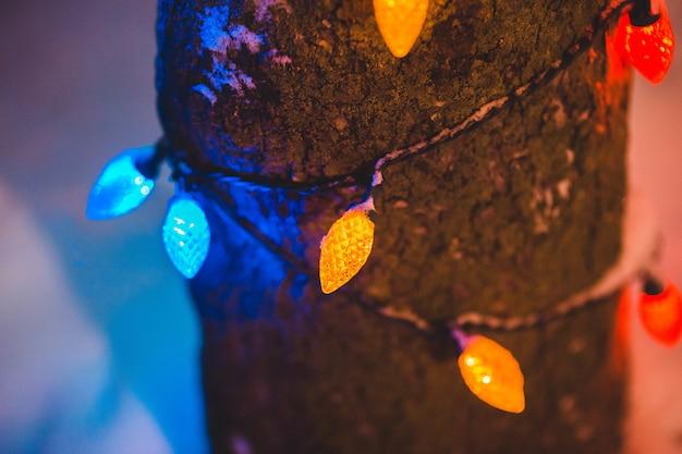 Geel, blauw en rood licht op de tak Gratis Foto