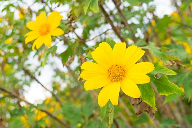 Geel bloemgebied Premium Foto
