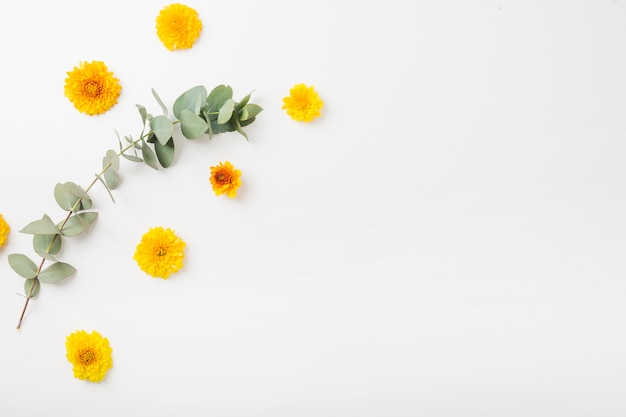 Geel goudsbloembloemen en takje op witte achtergrond Gratis Foto