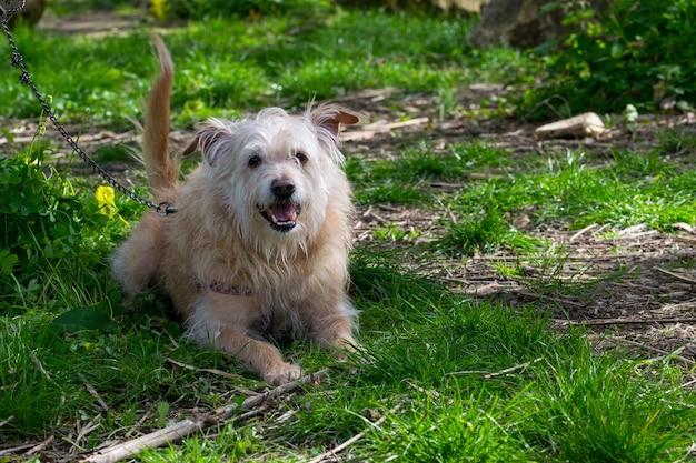 Gehoorzame beige hond die gretig op zijn eigenaar wacht op het maltese platteland. Gratis Foto