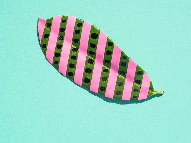 Geïsoleerd ficusblad met roze strepen op blauwe achtergrond Gratis Foto