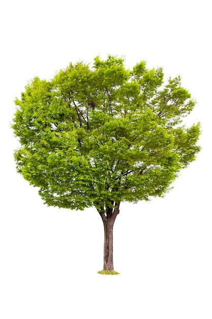 Geïsoleerd van boom voor ecologiedecoratie Premium Foto
