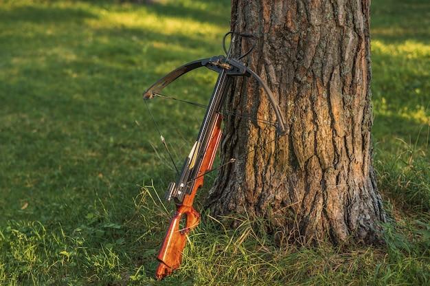 Geladen kruisboog staat bij de boomstam. Premium Foto