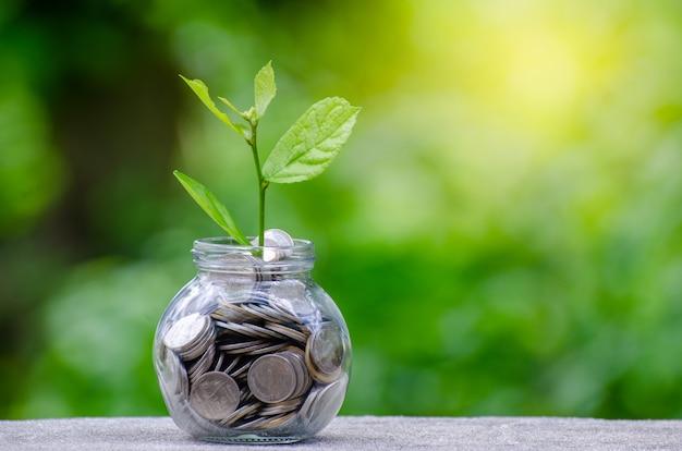 Geldfles bankbiljettenboom afbeelding van bankbiljet met plantengroei bovenop voor zakelijke gree Premium Foto