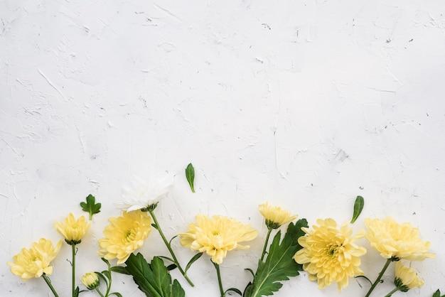 Gele anjerbloemen en exemplaarruimte Gratis Foto