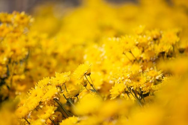 Gele bloem achtergrond. Gratis Foto