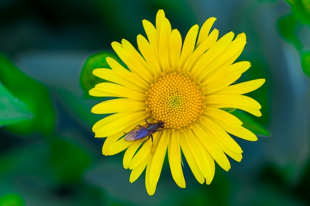 Gele bloem in groen gras Premium Foto