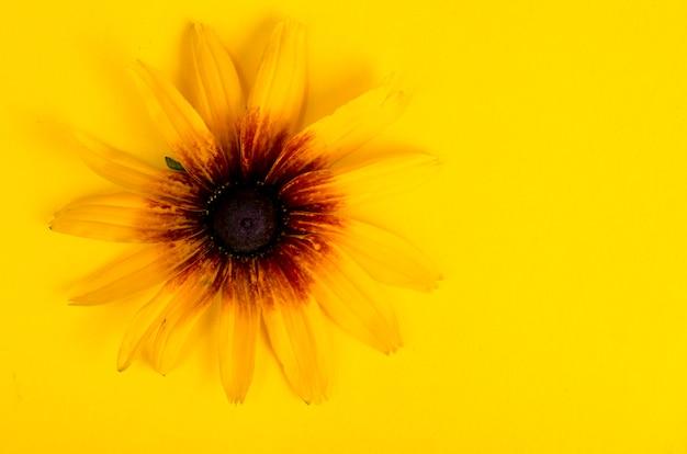 Gele bloem op heldere document achtergrond Premium Foto