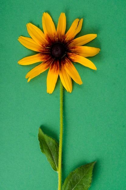 Gele bloem op heldere papierachtergrond gelukkig nieuw jaar 2020 jaar van de rat Premium Foto