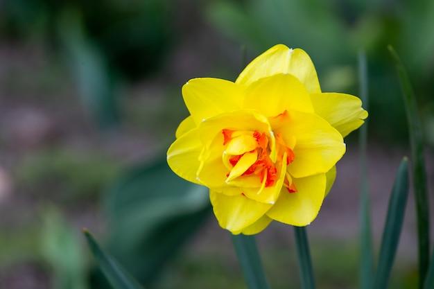 Gele bloemen op groen Premium Foto