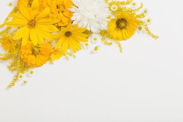 Gele bloemen op witte achtergrond Premium Foto