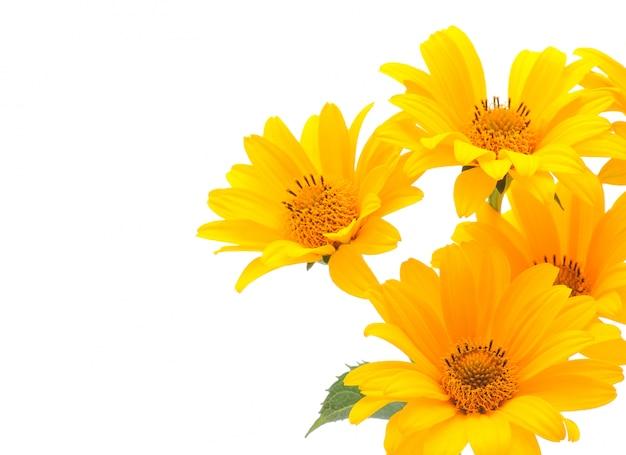 Gele bloemen Premium Foto