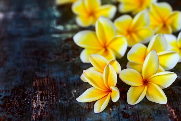 Gele frangipani plumeria bloemen op donker blauwe houten rustieke tafel. Premium Foto