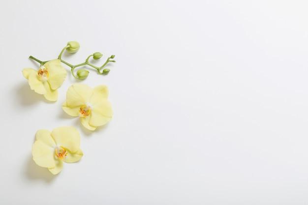 Gele orchideeënbloemen op wit oppervlak Premium Foto