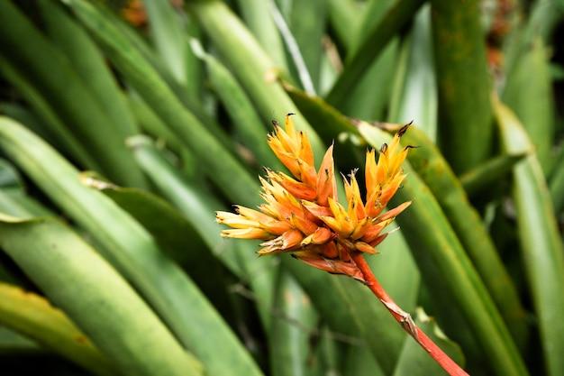Gele tropische bloem met vage achtergrond Gratis Foto
